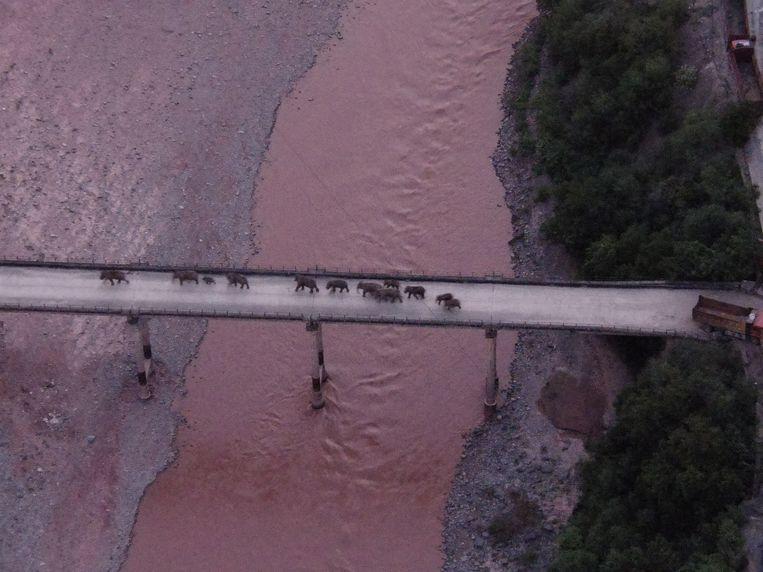 De kudde wilde olifanten steekt de Yuanjiang-rivier over.  Beeld  REUTERS