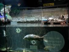 Artis renoveert aquarium voor 15 miljoen euro dankzij stadsbegroting