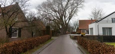 Gezonde bomen Oirschot wijken niet voor ontsluitingsweg nieuwe woonwijk: 'Die komt aan de andere kant'