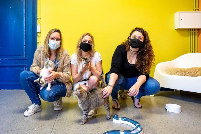 Sandra, Laurien en Mieke, en de andere vrijwilligers van Dendermondse Zwervertjes, zitten met de handen in het haar. Er is een te grote toestroom aan zwerfkatten.