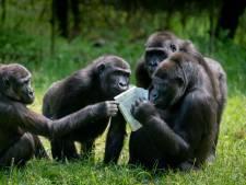 Is je manager een zilverrug gorilla of een kuifmakaak?