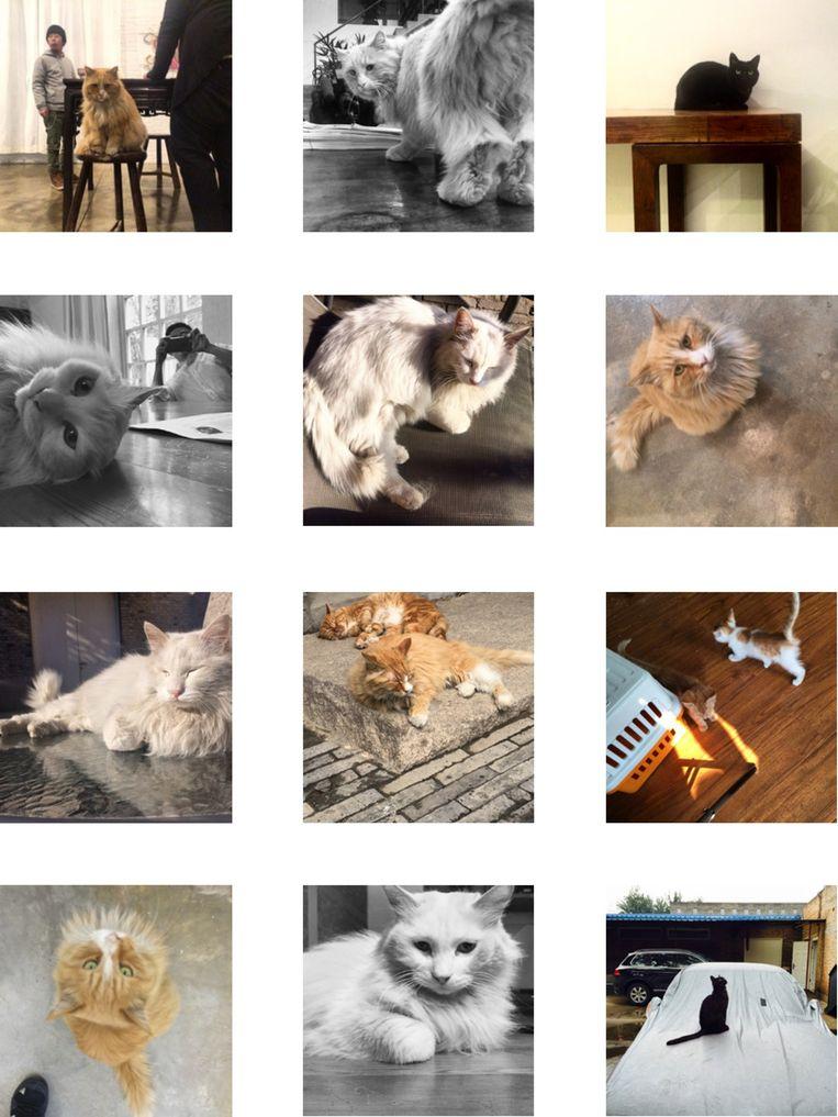 De katten op het Instagram-account van Ai Wei Wei Beeld null