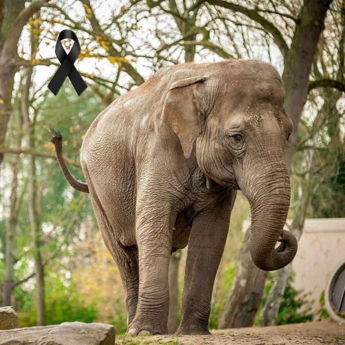 L'éléphante se trouvait en Belgique depuis 1974.
