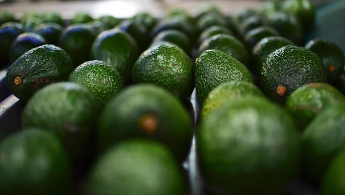 Laat de avocado's maar aanrukken: vanaf februari kun je terecht in het eerste avocadorestaurant van Europa.