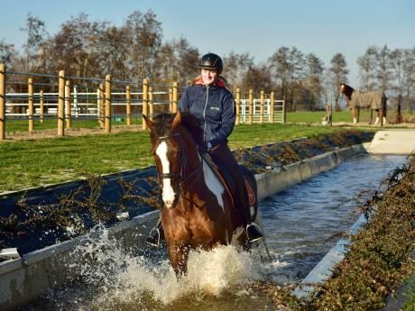 Een Nederlandse primeur in Bergambacht: aquajoggen voor paarden