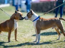 'Zutphen doet te weinig tegen hoog-risicovolle agressieve honden'