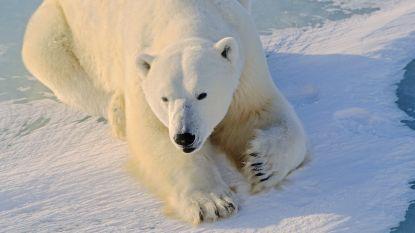 Manifestatie tegen komst van ijsberen naar Pairi Daiza