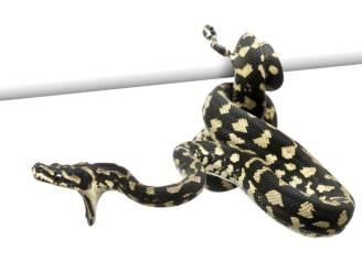 Vrouw vindt slapend kindje in greep van python