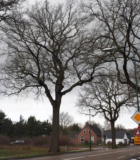 Bomenstichting in hoger beroep tegen kap bomen Graafsebaan Heesch