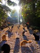 Op het erf van Wetland Cats zijn tientallen katten te vinden die niet elders terecht kunnen.