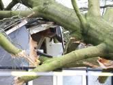 Westerstorm in Twente:  één dode, 500 meldingen, miljoenen schade