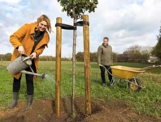 Boomplantactie maakt Wetteren wat groener met 408 nieuwe bomen en 510 struiken