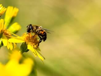 Bijensafari doet je de natuur achter je deur ontdekken