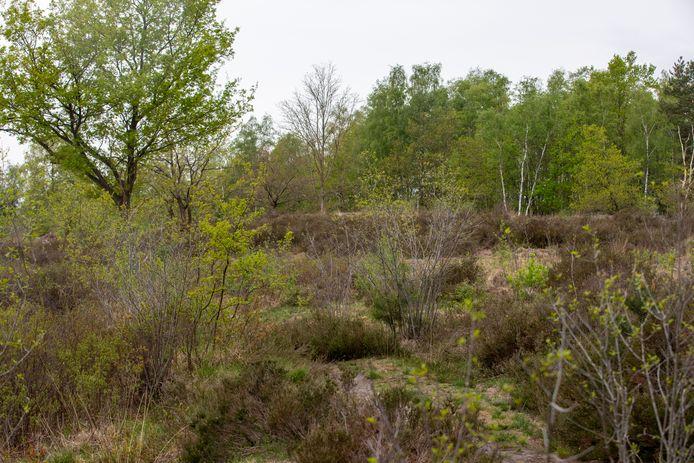 PVDA is niet opgezet met de plannen van Natuurpunt om 28 hectare aan bos te kappen in natuurgebied De Maten.