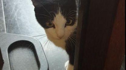 Unieke bezoeker voor Vleeshuismuseum: iemand zijn katje kwijt?