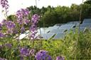 Solarpark De Kwekerij in Hengelo, een voorbeeld van een zonneveld waarbij aandacht besteed is aan de inpassing in het landschap.