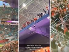 Scène surréaliste dans un stade à Miami: un chat miraculeusement sauvé par des spectateurs