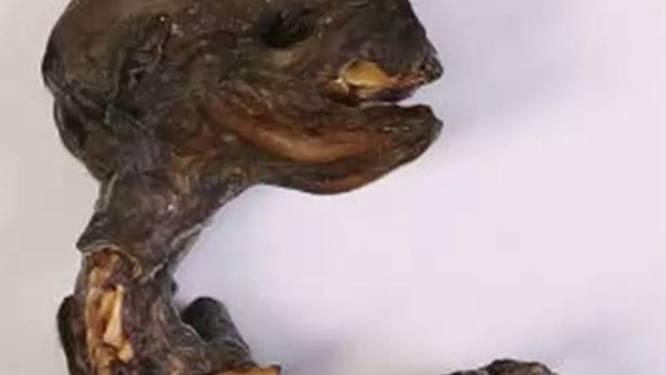 Une étrange créature découverte en Russie