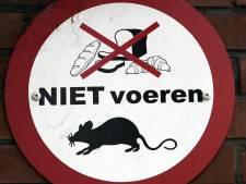 Gorinchem belooft snel maatregelen tegen overlast ratten