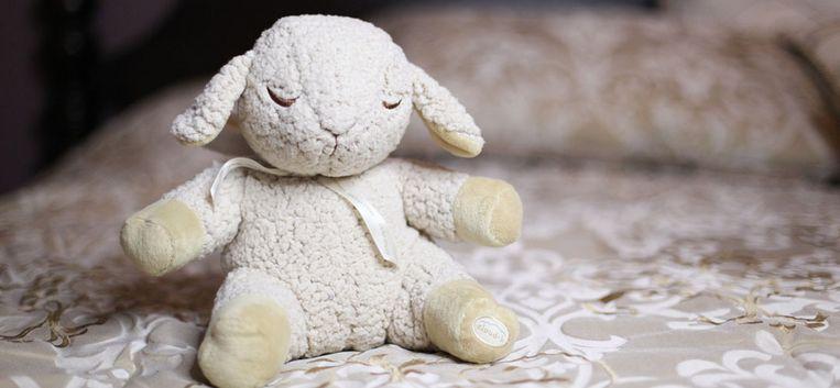 Sylvia: 'Lammie, het knuffelschaapje dat ze als baby kreeg, is gestolen'