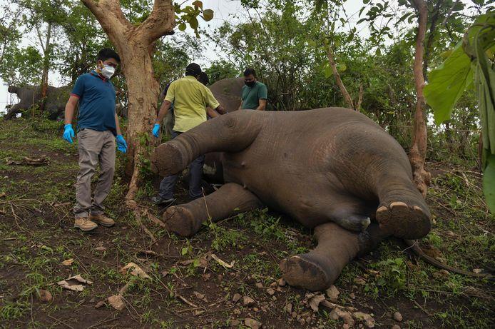 Le ministre des Forêts de l'Assam, Parimal Suklabaidya, s'est dit profondément peiné de la mort de ces animaux.
