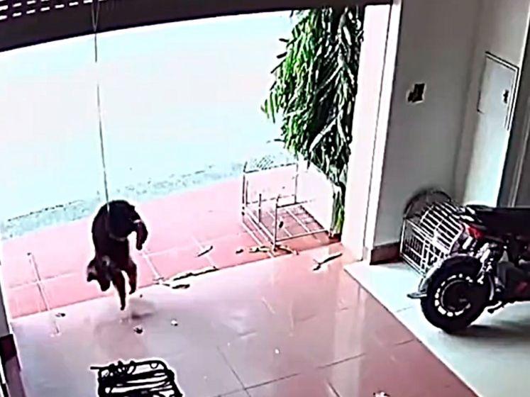Hond bungelt in lucht met halsband aan poort