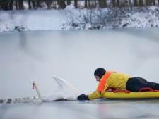 Brandweer redt zwaan uit ijs in Boxmeer