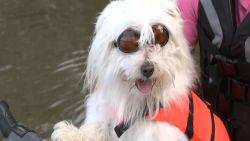 Finse hond Oukka houdt van jetskiën