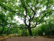 Rotterdam en Bladel strijden om de mooiste boom van het jaar