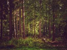 Kap van duizenden bomen in Hilversum gaat door