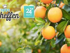 Salade met sinaasappel, venkel en Hollandse garnalen