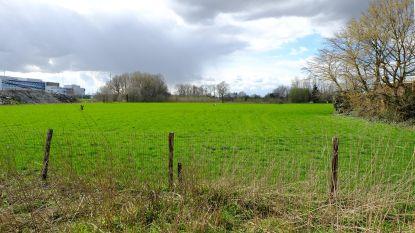 Zes hectare bos langs R6 op komst