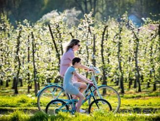 De 6 mooiste wandel- en fietsroutes om bloesemfoto's te maken