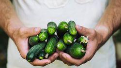 Eerste komkommer kost 65 euro