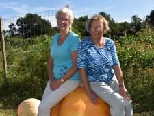 Pompoen van ruim 109 kilo wint in Nijverdal