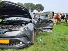 Koeien kijken verschrikt op bij ongeval Vinkenbuurt: auto vliegt weiland in