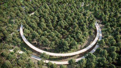 Hier fiets je door de boomtoppen