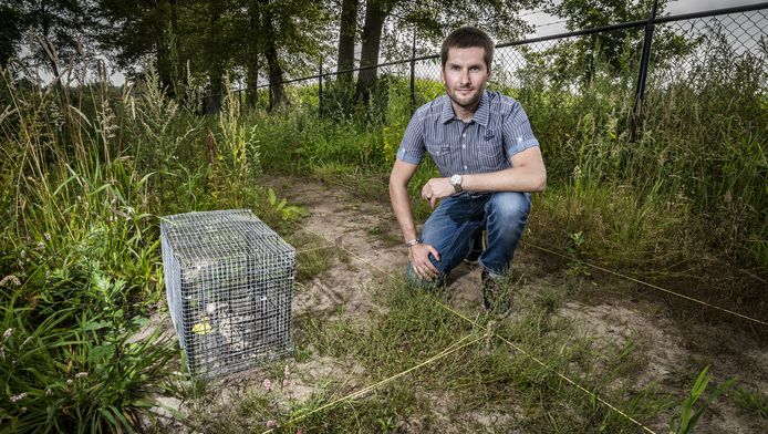 Tristan Krap onderzoekt dode varkens op verloop staat van ontbinding.