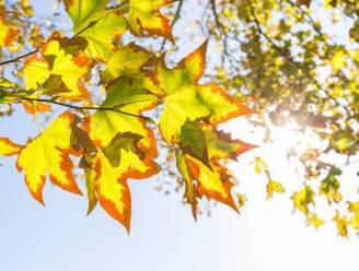 Een échte zondag: stralend, zonnig weer met temperaturen tot 14 graden vandaag