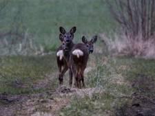 Vier dode reeën aangetroffen bij Van Ommerenpark: 'Lijn je hond aan!'