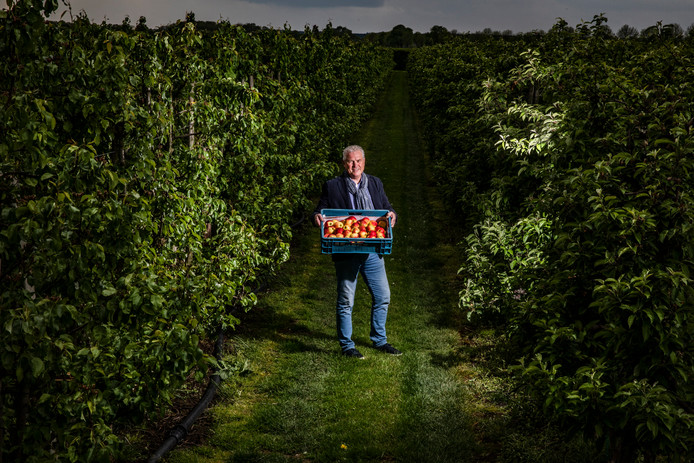Anton van der Kamp met Achterhoekse appels.