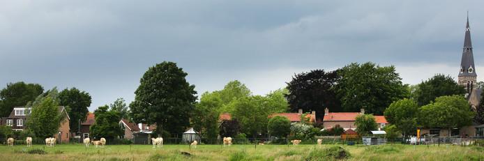 De koeien in Riel pal achter zijn achtertuin zorgen volgens Daan Kosten voor stank- en geluidsoverlast.
