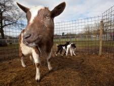 Nijmeegse Kinderboerderijen weer open zonder reserveren