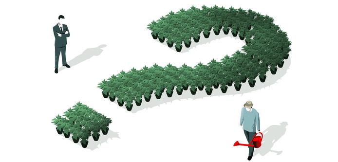 Het op stapel staande experiment met gereguleerde wietteelt is met vraagtekens omgeven.