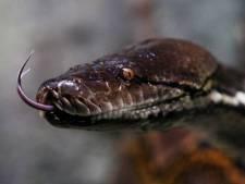 Python in tuin leidt naar hennepkwekerij