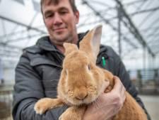 Koddige konijnen, kekke kippen en stoere sierduiven stelen de show tijdens dierententoonstelling in Kapelle