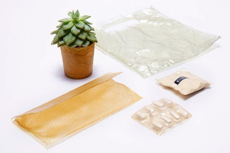 Schalen van garnalen, krabben en andere kreeftachtigen leveren dit 'plastic' op. Beeld rv