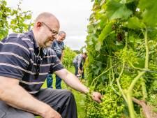 Echtpaar kan het niet meer aan: vrijwilligers springen bij op wijngaard Elshout