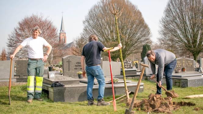 """""""Ons meer wapenen tegen hete en droge zomers"""": 75 nieuwe bomen op parkbegraafplaats Tereken"""