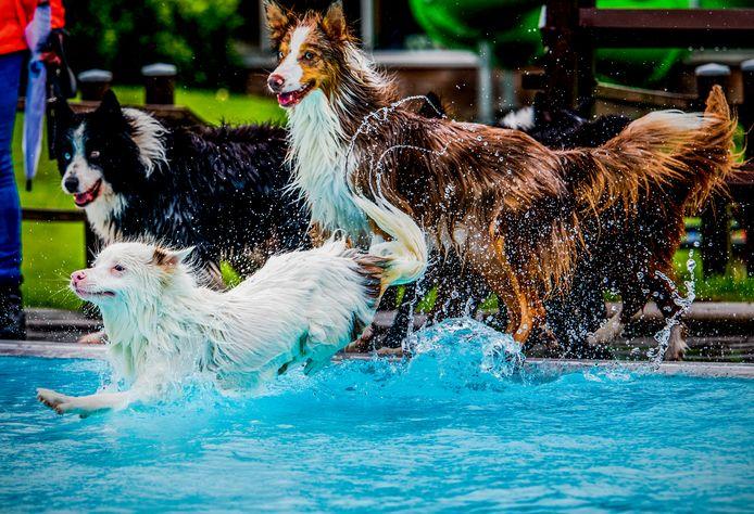 Honden konden zondagochtend een duik nemen in zwembad De Fakkel in Ridderkerk.